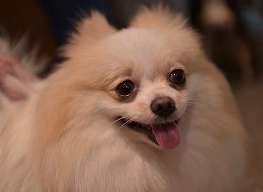 f:id:dog_life_saving:20170714145140j:image