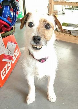f:id:dog_life_saving:20170725143755j:image