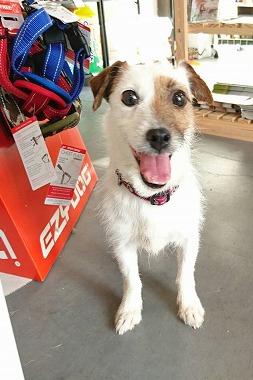 f:id:dog_life_saving:20170725143802j:image