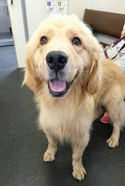 f:id:dog_life_saving:20170725145320j:image