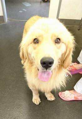 f:id:dog_life_saving:20170725145323j:image