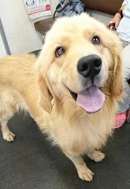 f:id:dog_life_saving:20170725145326j:image