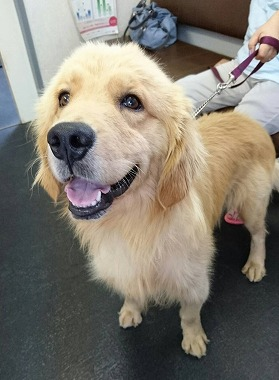 f:id:dog_life_saving:20170725145331j:image