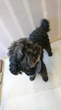 f:id:dog_life_saving:20170729151449j:image