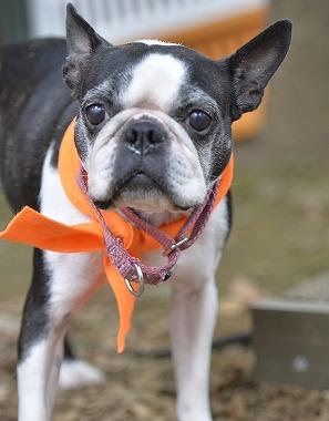 f:id:dog_life_saving:20170912143810j:image