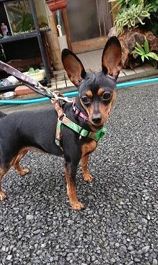 f:id:dog_life_saving:20170912143839j:image