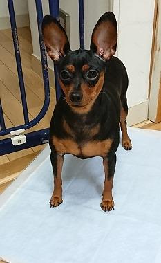 f:id:dog_life_saving:20170912143841j:image
