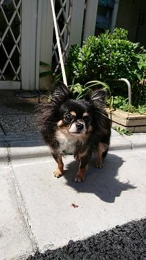 f:id:dog_life_saving:20170912143844j:image
