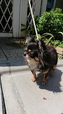f:id:dog_life_saving:20170912143845j:image