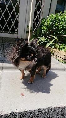 f:id:dog_life_saving:20170912143846j:image