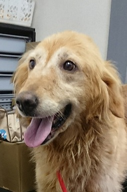 f:id:dog_life_saving:20170925155414j:image