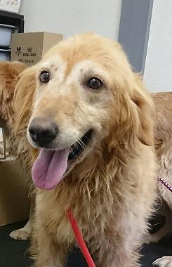 f:id:dog_life_saving:20170925155415j:image