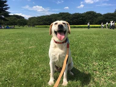 f:id:dog_life_saving:20170927132808j:image