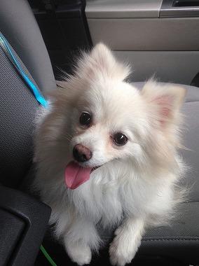 f:id:dog_life_saving:20171014154406j:image