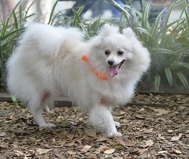 f:id:dog_life_saving:20171014154409j:image