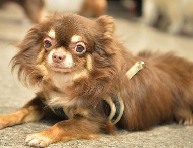 f:id:dog_life_saving:20171106141654j:image