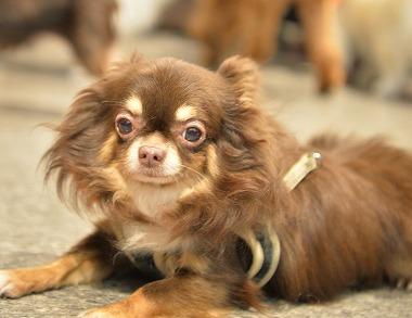 f:id:dog_life_saving:20171106141701j:image