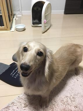 f:id:dog_life_saving:20171106142312j:image