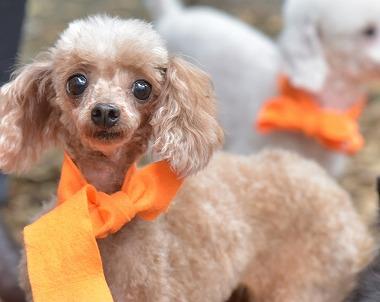f:id:dog_life_saving:20171106142945j:image