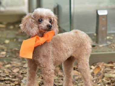 f:id:dog_life_saving:20171106142947j:image