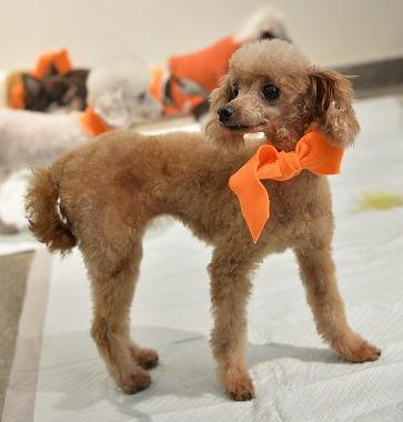 f:id:dog_life_saving:20171106142948j:image