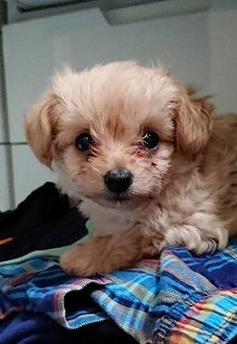 f:id:dog_life_saving:20171113134626j:image