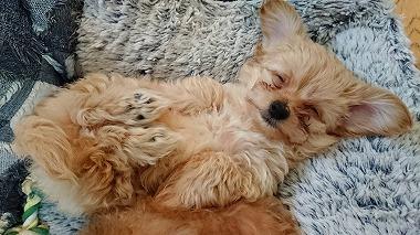 f:id:dog_life_saving:20171113134627j:image