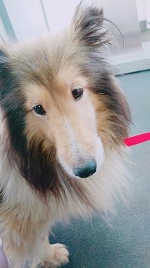 f:id:dog_life_saving:20171113134628j:image