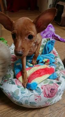 f:id:dog_life_saving:20171113134632j:image