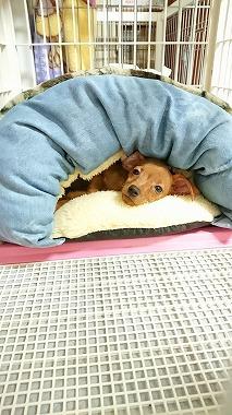 f:id:dog_life_saving:20171113134633j:image