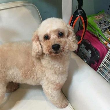 f:id:dog_life_saving:20171113134634j:image