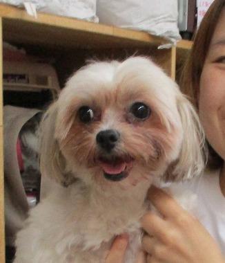 f:id:dog_life_saving:20171120144033j:image