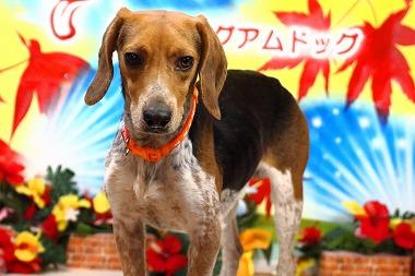 f:id:dog_life_saving:20171120150851j:image