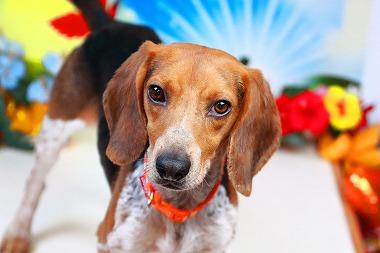 f:id:dog_life_saving:20171120150904j:image