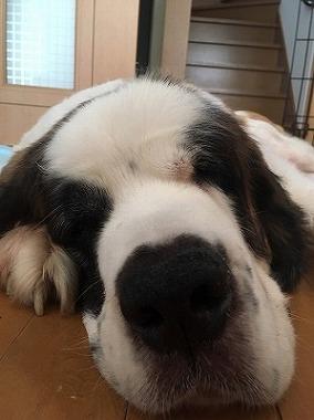 f:id:dog_life_saving:20171120151810j:image