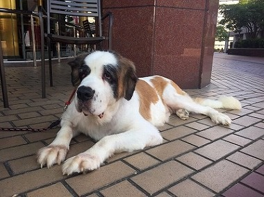 f:id:dog_life_saving:20171120151817j:image