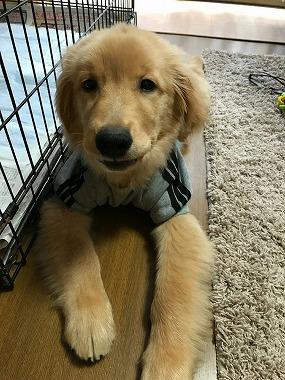 f:id:dog_life_saving:20180104160655j:image