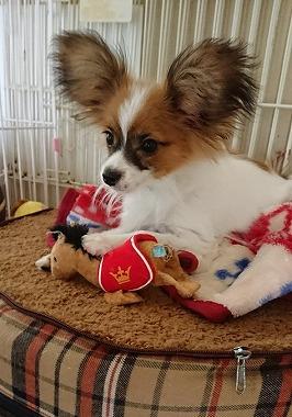 f:id:dog_life_saving:20180104160659j:image
