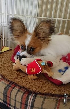 f:id:dog_life_saving:20180104160701j:image