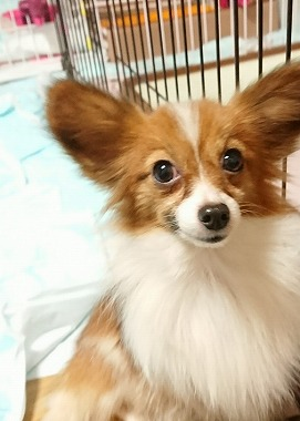 f:id:dog_life_saving:20180104160710j:image