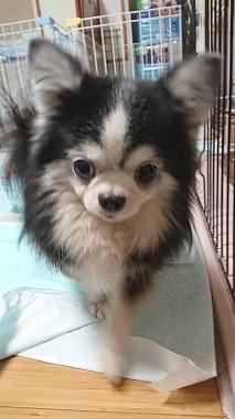 f:id:dog_life_saving:20180104160713j:image