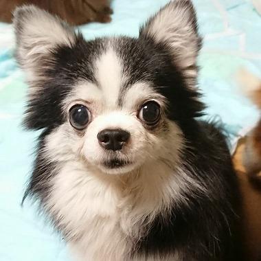 f:id:dog_life_saving:20180104160714j:image