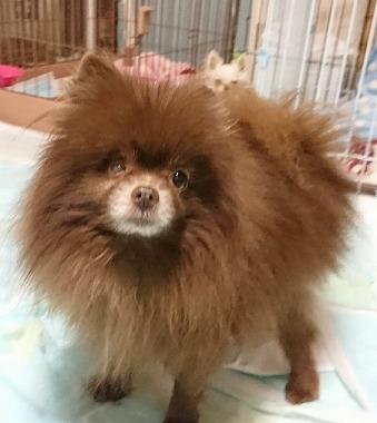 f:id:dog_life_saving:20180104160716j:image