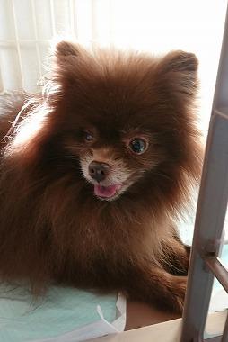 f:id:dog_life_saving:20180104160718j:image