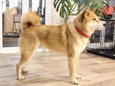 f:id:dog_life_saving:20180126110808j:image