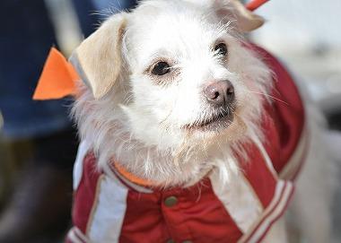 f:id:dog_life_saving:20180205131146j:image