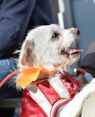 f:id:dog_life_saving:20180205131147j:image