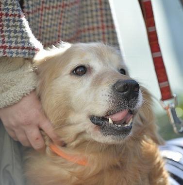 f:id:dog_life_saving:20180205131151j:image