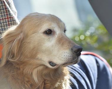 f:id:dog_life_saving:20180205131153j:image