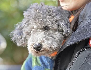 f:id:dog_life_saving:20180205131200j:image